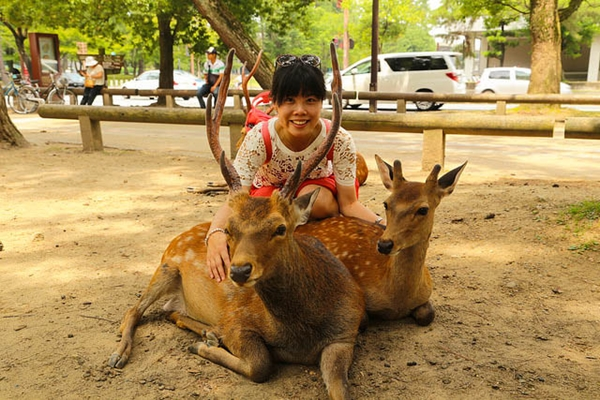 Food and travel guide Nara Park Deer